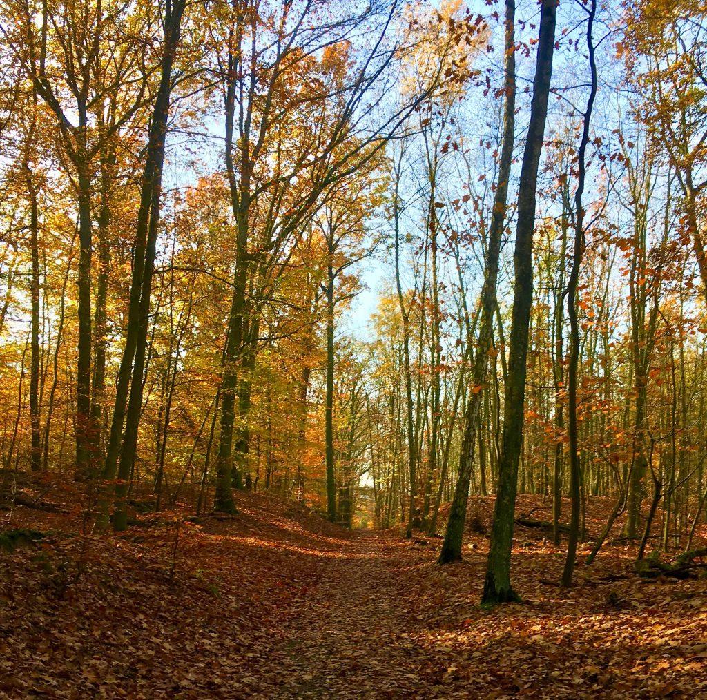 Coaching im Wald von Konradshöhe